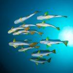 草加市古綾瀬川の魚大量死の原因は?塩化銅の人体への影響と応急処置(措置)方法も