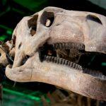幕張恐竜展2018の割引チケットと開催期間は?混雑状況や駐車場も