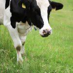 茨城の給食の牛乳異臭の原因は?腐敗か消毒水の塩素が混入?