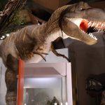 群馬県立自然史博物館の割引クーポンは?入場料金や駐車場の混雑状況も