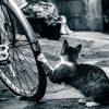 自転車あさひのパンク防止剤入りのタイヤを修理すると嫌がられるって本当だった