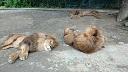 群馬サファリパーク写真1